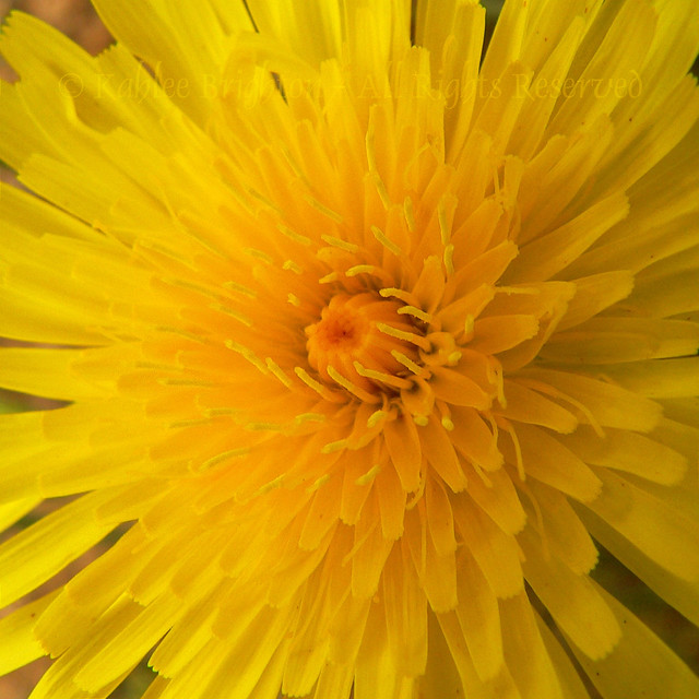 The Universe in a Desert Dandelion