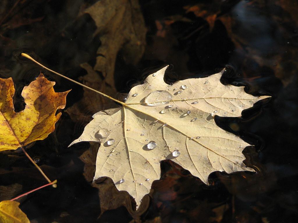 Droplets on a leaf raft