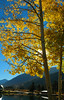 And There Was Light (terminal orbit) Tags: morning blue autumn sun sunlight lake mountains reflection tree water beautiful beauty leaves sunrise golden october colorado quiet unitedstates bright peaceful calm special clear stunning keystone birch cloudless aspen sly sparkling 2007 dazzling andtherewaslight goldenmorning