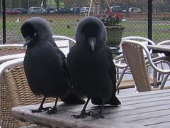 Tortelduifjes? (Eisbeertje) Tags: holland birds animals leiden leidsehout nederland vogels dieren tieren