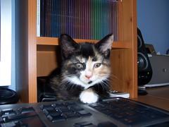 Kara & The Computer