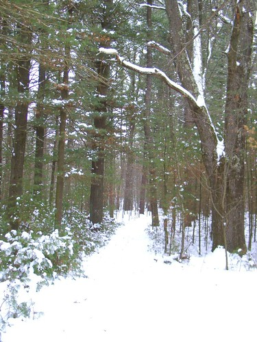 The Trail in Winter