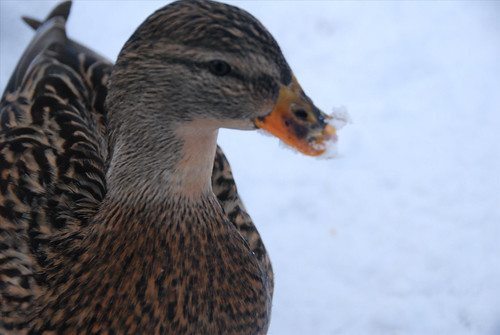 Ms. Freaky Beaky - profile
