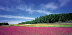 Flowers in Sweeden (MagSiv2004) Tags: flowers blue trees sky green amazing colorful europe paradise purple sweeden outstading