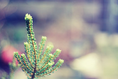 Something pretty (*Alyssa.) Tags: nature backyard 50mmf18