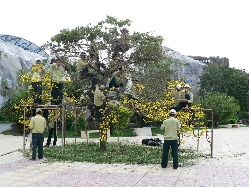 Thirteen men in a tree