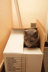 Cadeau Surprise (Greg.C) Tags: cat chat canon5d ef2470f28l euclide