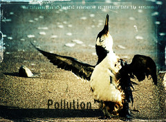 Pollution - Dictionary of Image (s0ulsurfing) Tags: blue light shadow sunlight bird art beach birds illustration photoshop island bay design coast graphicdesign artwork sand graphic bright image artistic stones acid shoreline creative photojournalism manipulation ps pebbles creation coastal shore pollution vectis isleofwight definition oil environment coastline layers february distress 2008 isle vignette soe dictionary wight freshwater rspca harmful polluted guillemot commonmurre naturesfinest uriaaalge auk freshwaterbay outstandingshots s0ulsurfing commonguillemot ysplix thedictionaryofimage gratitude40