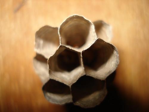 rumah tawon kertas