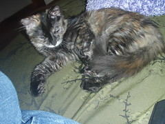 day one (catling42) Tags: animals kitties kaylee