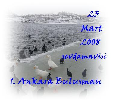 Kopyasý 23