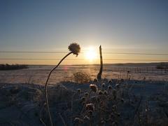 Last Sunrise at Re-Member, Pine Ridge Reservation, South Dakota during Saint Anselm SBA