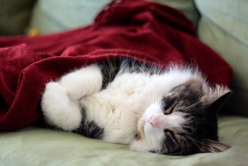 Grabbing A Snooze