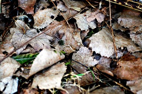 04/15/08 leaves