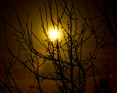 Branches bathed in Moonlight (iceman9294) Tags: moon branches fullmoon moonlight chriscoleman 70200mm d300 firstquality iceman9294 lightroom2