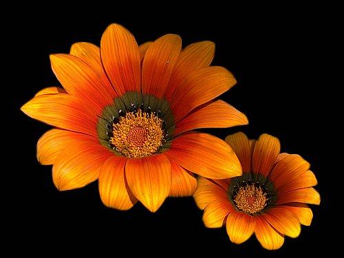 Flores amigas by hiskinho.