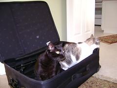 Fatboy & Lowrider ready for a trip