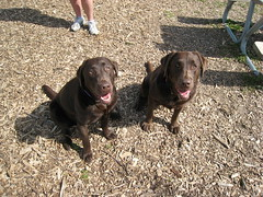 Dakota and Chey @ the Dog Park