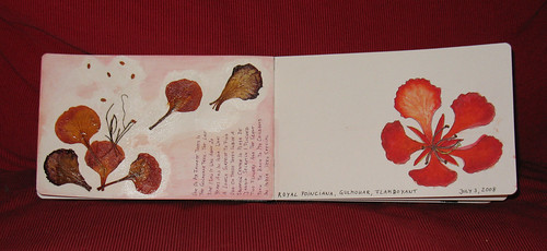 Gulmohar Flowers in sketch journal