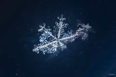 Melting Snowflake (Fab Boone Photo) Tags: nature snow macro photography nikon close closeup neige flocon cold 2017 snowflake winter fabienboone fabboone