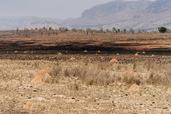DSC06816_DxO Termitenhügel und Brandspuren_Bildgröße ändern (Jan Dunzweiler) Tags: afrika madagaskar fahrradreise radreise momotas africanbikers jandunzweiler termite termitenhügel brandrodung