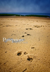 Pawprints in the Sand (Samantha Decker) Tags: travel vacation beach photoshop geotagged ma bay sand capecod massachusetts sony kitlens adobe destination mass dslr a200 postprocess pawprints wellfleet cs4 lieutenantisland sal1870 digitalsinglelensreflex ltisland alpha200 topazadjust samanthadecker geo:lat=41894219 geo:lon=70021464