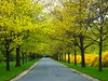 Yellow Spring Road (Stanley Zimny (Thank You for 30 Million views)) Tags: road trees yellow garden botanical spring seasons path skylands 100commentgroup aboveandbeyondlevel1 aboveandbeyondlevel2