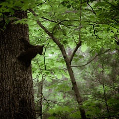 Great smoky mountains (Yann Beauson) Tags: bear cub us smokies bearcub