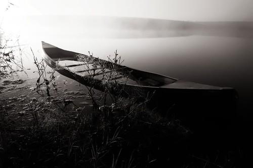 foggy 026