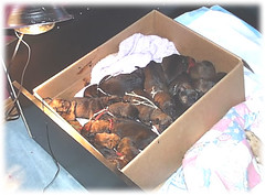 14 Puppies in a box (muslovedogs) Tags: dogs puppy mastweiler myladyoffspring lilboyoffspring