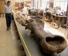 Paul Sereno and Sarcosuchus