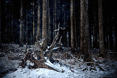 Magical Forest (Philipp Klinger Photography) Tags: wood winter snow tree texture forest fallen vignette taunus hesse dcdead