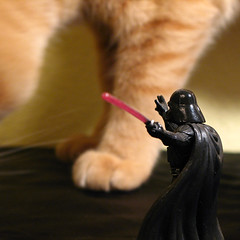 Meow Wars (kevin dooley) Tags: red favorite orange beautiful statue cat wow giant toy foot book starwars interesting fantastic paw feline doll flickr pretty force very good gorgeous military awesome award superior kitsch super best collection explore most fred winner stunning excellent knowledge meow much mutant lightsaber collectible darthvader figurine incredible protection defense forcedperspective breathtaking exciting enormous lightsabre phenomenal 500x500 onguard maytheforcebewithyou inagalaxyfarfaraway aplusphoto outofperspective book0
