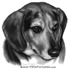 Gerry, Beagle Mix