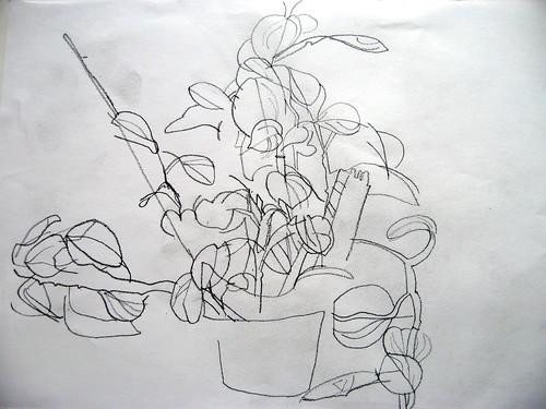 Contour Line Drawing Art : Blind contour drawing lessons tes teach