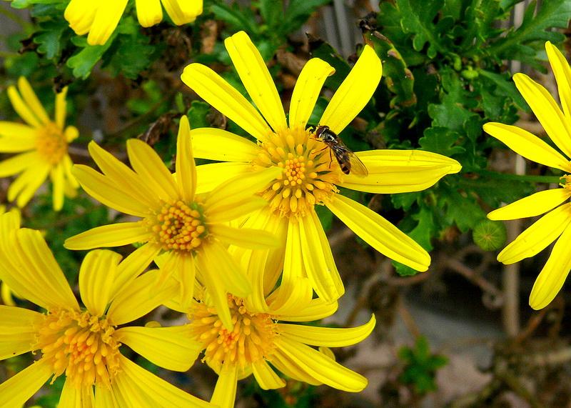 Quelques insectes sympathiques ... 2236051518_5384375739_o