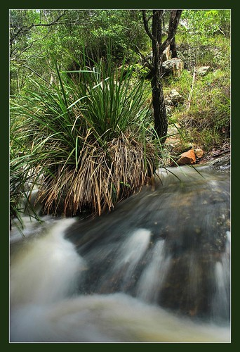 Stream at Mount Coot-tha