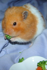 Yummy Broccoli!