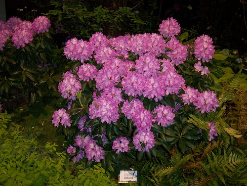 flowershow 005