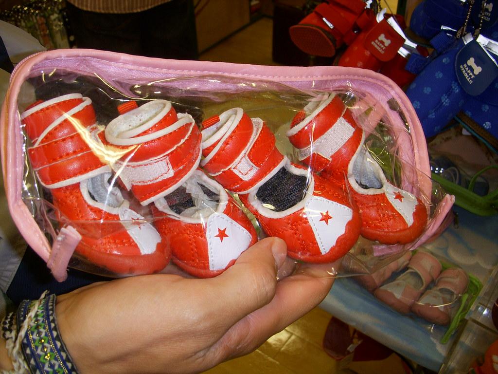 zapatos de perro