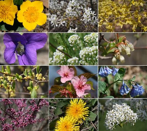 April wild flowers