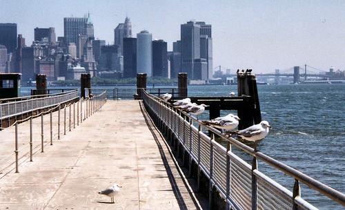 Birds.Skyline.99