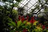 Doris Duke Display Gardens (nosha) Tags: flower nature duke greenhouse horticulture destroyed dukegardens dorisduke ddcf dukefarms 1000placesusa savedukegardens dorisdukecharitablefoundation joanesperopresident nannerlokeohanechair johnjmackvicechair harrybdemopoulos anthonysfauci jamesfgill annehawley peteranadosy williamhschlesinger johnhtwilson johnezuccotti