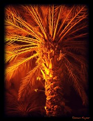 Night under the Palm...mmmmm... (FotoManiacNYC) Tags: florida miami southbeach colorphotoaward theperfectphotographer funfanphotos