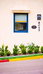 8045 (Brian Auer) Tags: california blue red plants sunlight color building green film window yellow wall outside unitedstates outdoor naturallight lajolla velvia fujifilm curb 135mm asa50 minoltasrtsuper positivecolorfilm