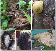 frogs and snails and puppy dogs tails