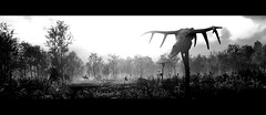 The Swamp (~Scimo~) Tags: landscape swamp tw3 thewitcher fantasy bw screenshot skull