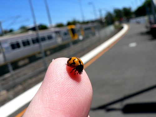 071013 lady beetle.jpg