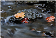 Autumn leaves (Jill's Junk) Tags: longexposure autumn eye fall water leaves creek bravo searchthebest disposablecamera dumbass labyrinth soe goldendreams themoulinrouge naturesfinest allyouneedislove magicdonkey flickrsbest roadtoheaven mywinners abigfave artlibre anawesomeshot ultimateshots blueribbonphotography superbmasterpiece infinestyle goldenphotographer diamondclassphotographer frhwofavs searchandreward flickrelite jalalspagesmasterpiecealbum photostosmileabout jillsjunk betterthangood theperfectphotographeraward theroadtoheaven goldstaraward platimunphotograph