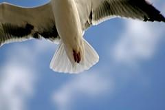 Al vuelo (angie_dj) Tags: detalle animal lanzarote ave patas alas gaviota famara vuelo naturesfinest ltytr1 ultimateshot